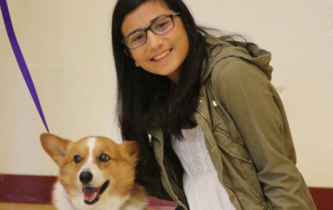 Therapy Dogs at Cupertino High School