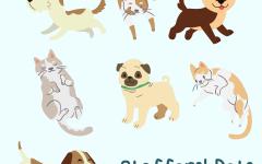 Feauturing Staffer Pets