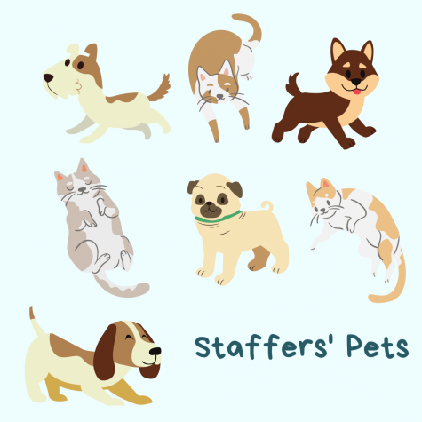 Feauturing Staffer Pets